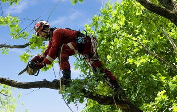 find trusted rated Tower Hamlets tree surgeons