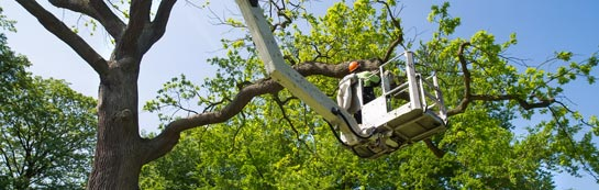 Tower Hamlets tree surgery services