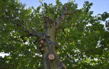 what is Tower Hamlets tree surgery?